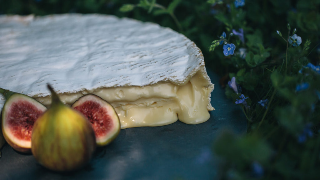 A picture of our delicious Baron Bigod brie, oozing on a slate with some figs